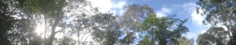 Anthropogenic climate change | treetops