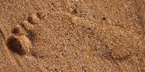 carbon footprint in sand