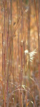 carbon sequestering | biosequestration into grasses