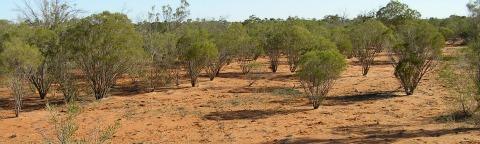 carbon sinks rangeland soils