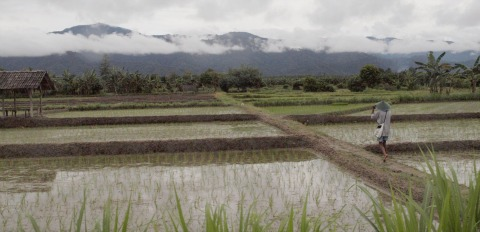 climate change adaptation | paddy fields