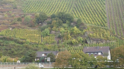 climate change agriculture | Rhine valley