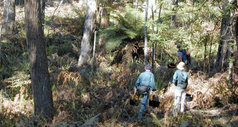 biosequestration in eucalyptus forest, NSW