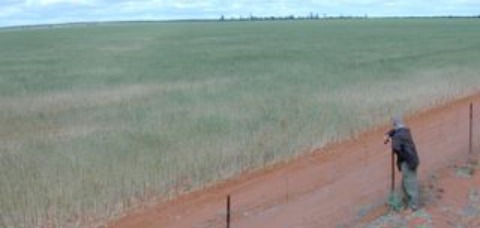 climate change adaptation | wheat fields in Western Australia