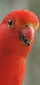 climate zones king parrot